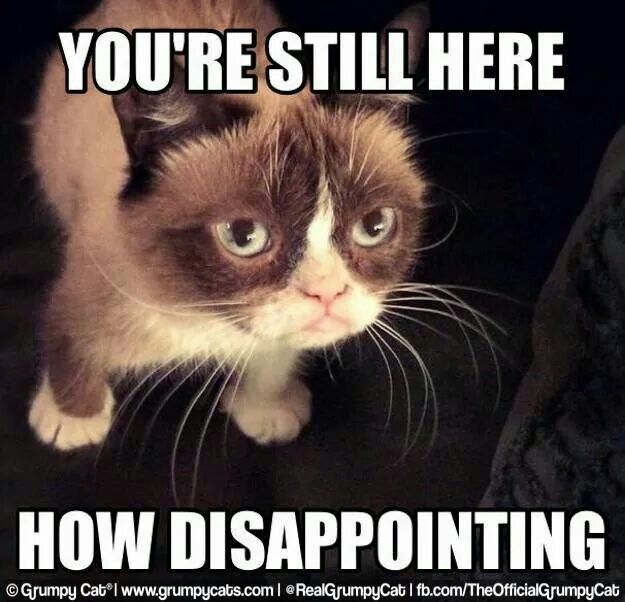 You Re Still Here How Disappointing Grumpy Cat Grumpy Cat Humor Funny Grumpy Cat Memes
