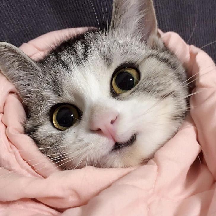 Cute Feel Good Wholesome Meme Dump Baby cats, Kittens