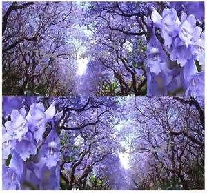 garden globes - Bing images
