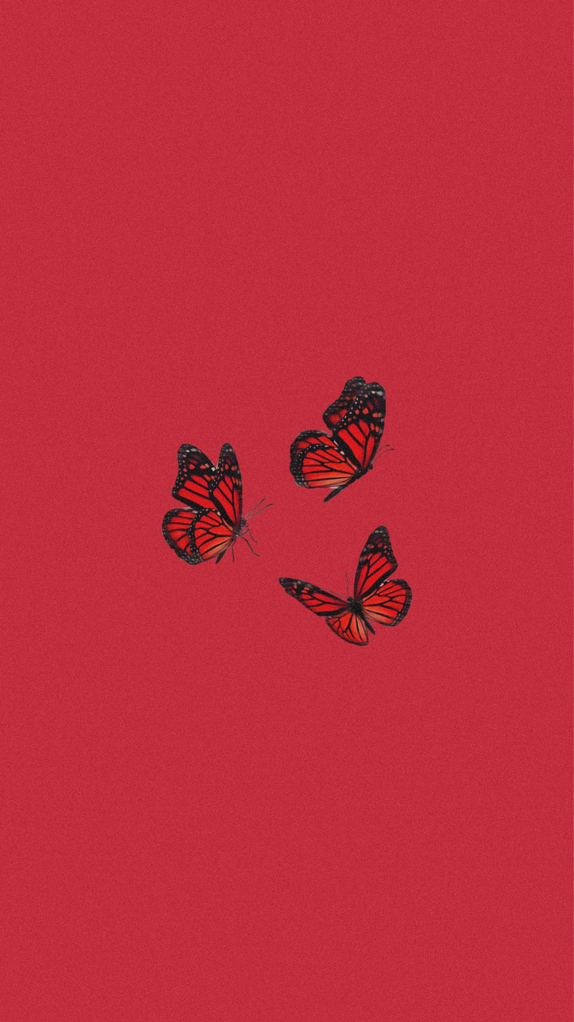 Butterfly Wallpaper In 2020 Butterfly Wallpaper Iphone Butterfly Wallpaper Edgy Wallpaper