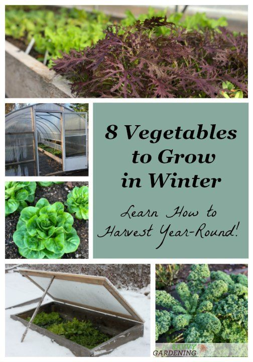 Growing winter vegetables is easier than you think Try these eight cold season superstars in your winter vegetable garden