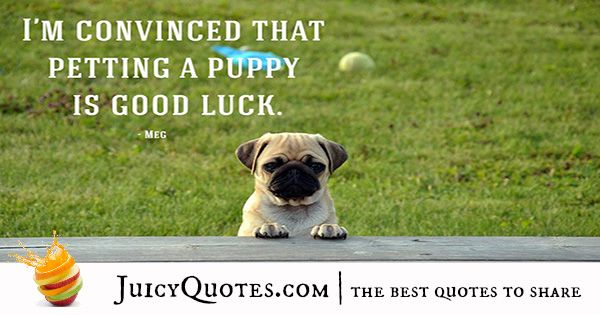 Quotes About Dogs 7 Cute Dogs Images Pug Dog Puppy Cute Dogs