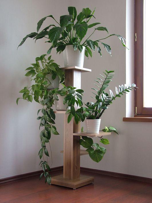 Indoor plant display and arrangement