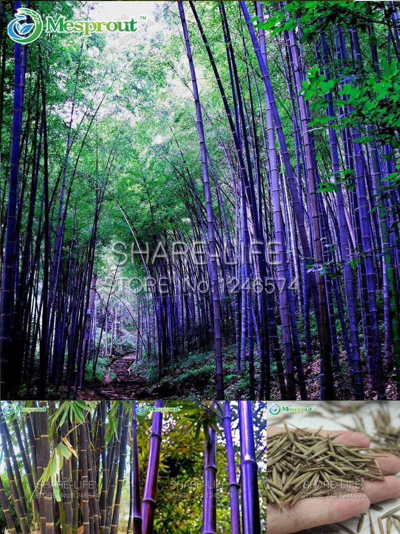 182 - Natural Kanagawa 100/% and #30 Silk Thread