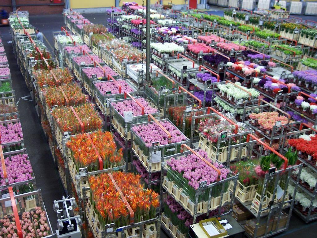 Blooming Wonderful Review Of Aalsmeer Flower Auction