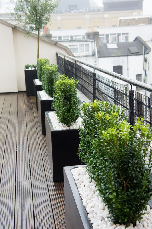 landscaping with potted boxwoods - Google Search Gardens - jardineras modernas