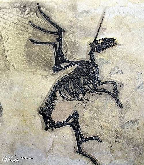 Image result for unicorn fossil