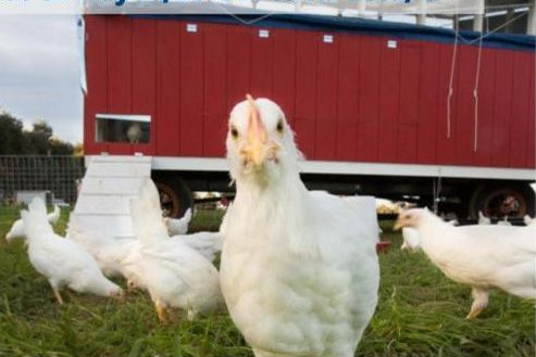 Virulent Newcastle Disease Outbreak Information and ...
