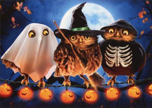 Halloween Owls (1 card/1 envelope) - Halloween Card INSIDE: Hoot ...