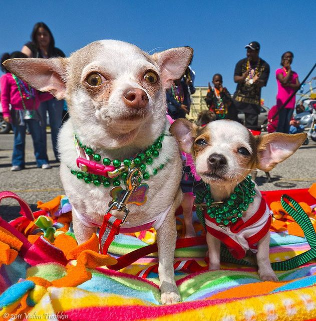 Dog Days of Summer on Galveston Island Texas tourism