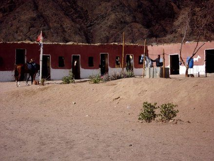 Picture of Stable Reitstall стабильный Sharm el Sheikh in