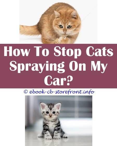c7e9afd729aa58997ebb70a183290041 - How To Get Rid Of Cat Dander On Furniture