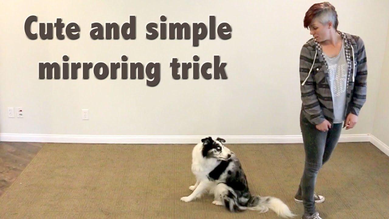 Cute Easy And Popular Trick To Train Dog Clicker Training Dog