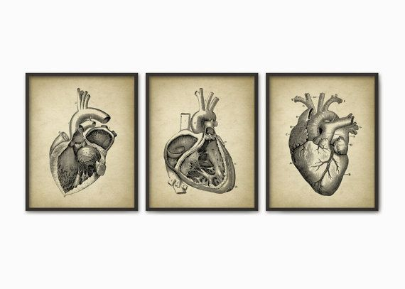 Heart Anatomy Print Set of 3 - Human Heart - Left And Right Auricle ...