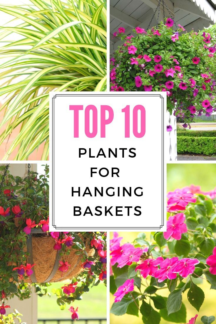 Top 10 Plants For Hanging Baskets, Outdoor Hanging Baskets For Plants
