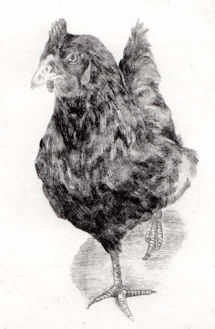 Drypoint by Sarah Bays