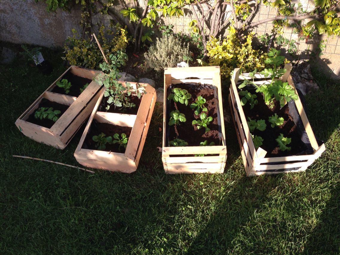 Tavolo Orto ~ Migliori immagini piante e orto sul balcone su
