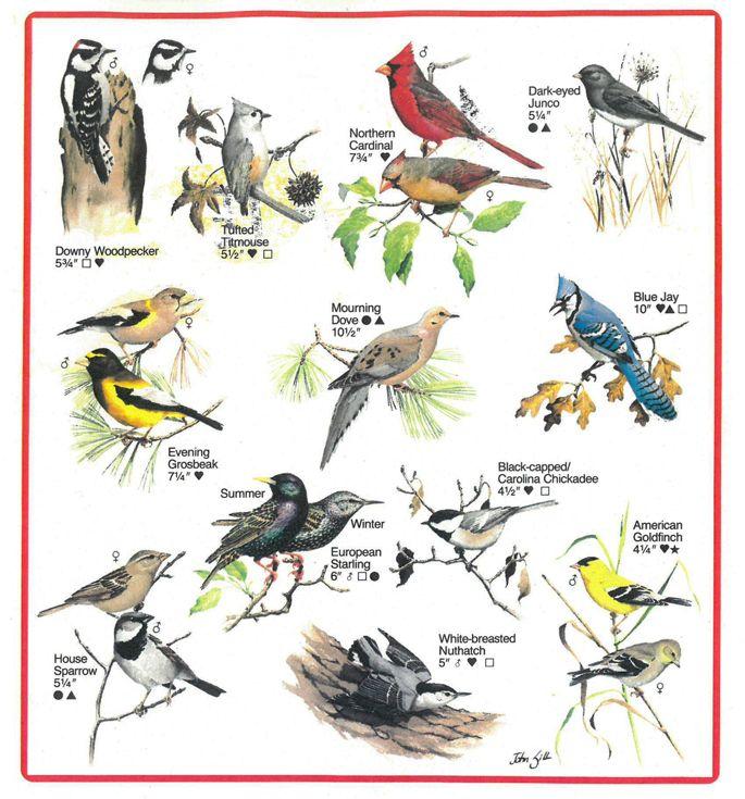 Bird Identification Chart from Ranger Rick magazine ...