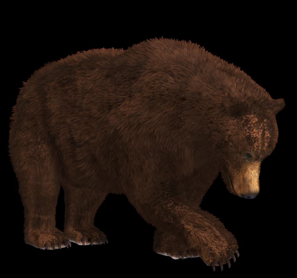 Bear Png Free Images Bear Brown Bear Black Bear