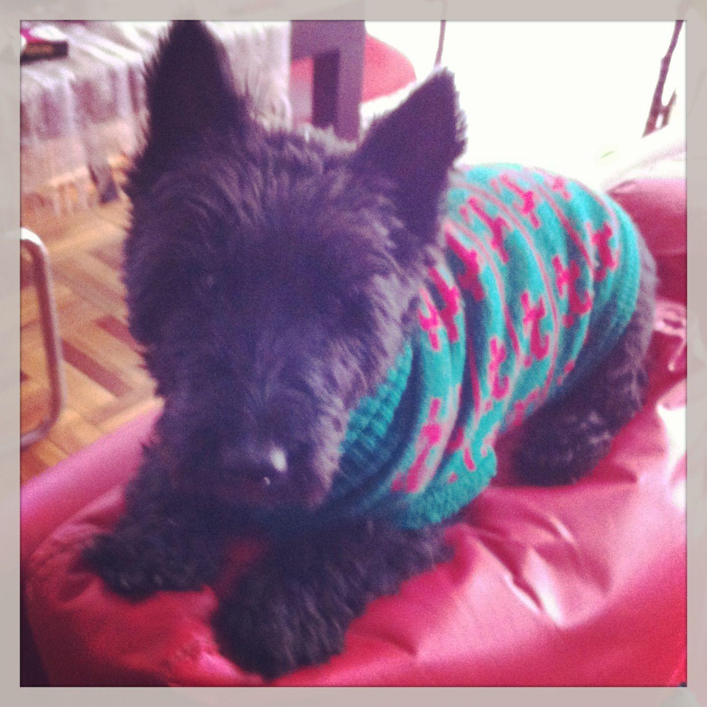 Hynde Scottish Terrier, mi mejor amiga y compañera leal :)