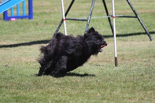 Dog Training Guard Dog Training Obstacle Course Dog Training