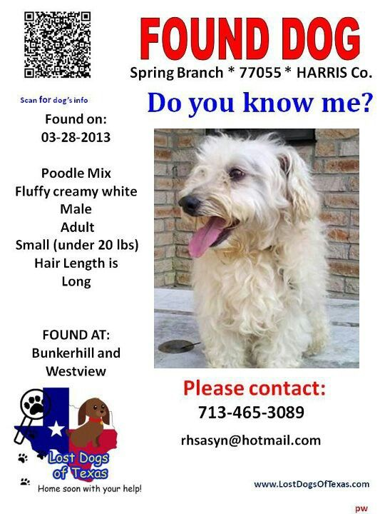 founddog HOUSTON TX Spring Branch area Losing a dog