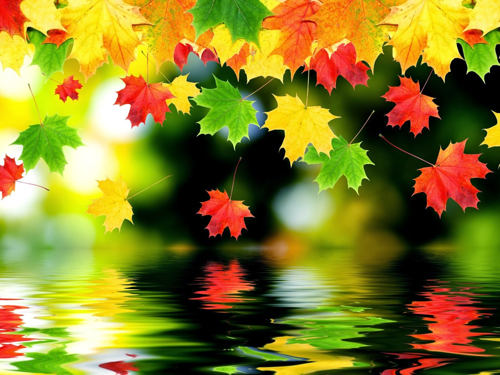 If You Are A Nature Lover And Love The Beauty Of Autumn Can Not Ignore Autumn Leaves Wallpaper Fall Wallpaper Iphone 6 Plus Wallpaper