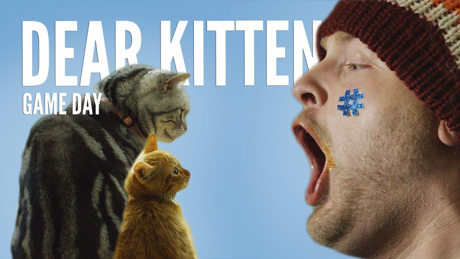 Dear Kitten Regarding The Big Game Teaser Purina Friskies Kitten Gif Purina Friskies Kitten