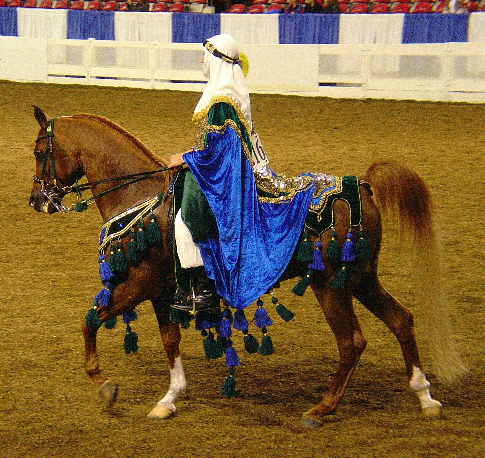 Gorgeous Native Arabian Costume Horse | Horse Decor ...