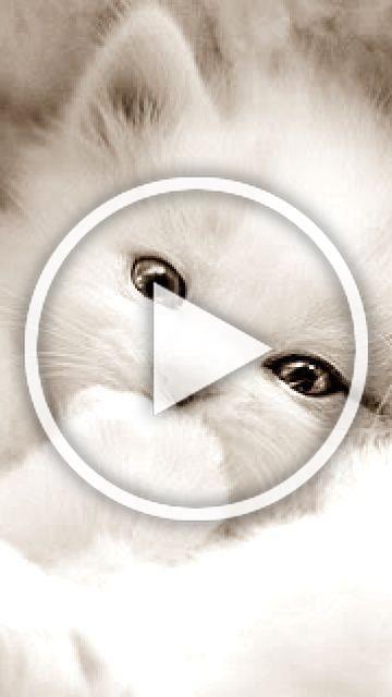 White beauty  Kitten #kitten #cat #cats #kitten #kittens #cute   - Celine et - #beauty #celebrities...