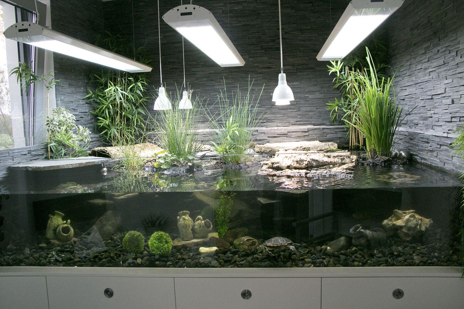 Aquarium Wasserschildkröten