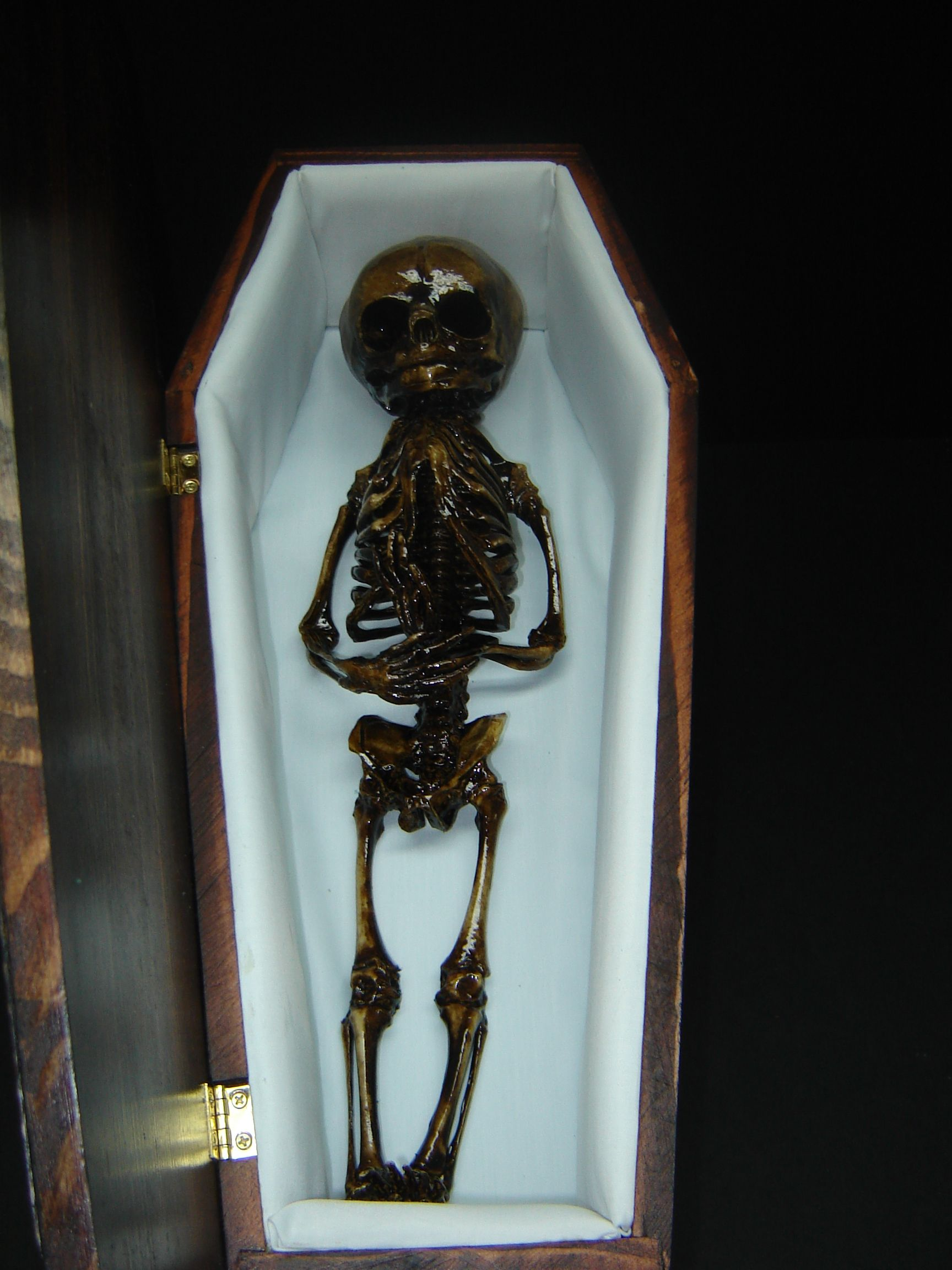 Fetal Skeleton In A Wood Casket A Truly Awful Creation