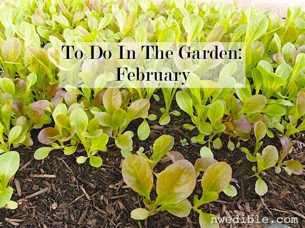 To Do In The Nw Edible Garden February 2014 Edible Garden