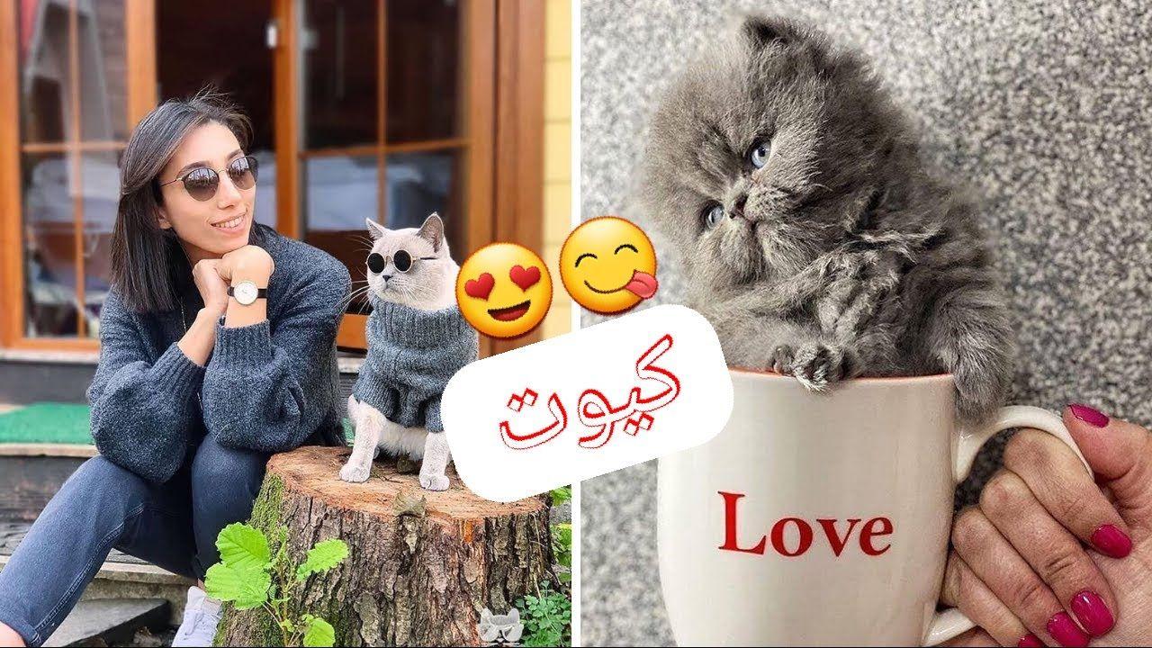 P1 قطط مضحكة جدا مقاطع مضحكة للقطط تحدي الضحك Funny Cute Cats Funny Cute Cute Cats