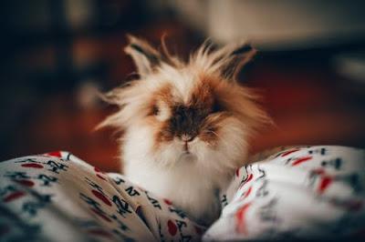 صور كيوت الجزء الاول صور حيوانات مدونة صور احترافية وصور مميزة Pet Rabbit Care Cute Baby Animals Cute Animal Photos