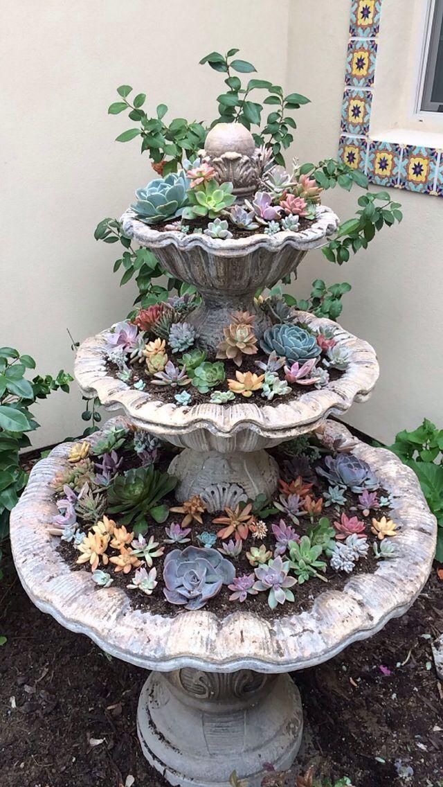 Succulent Fountain Indoor Garden Garden Design