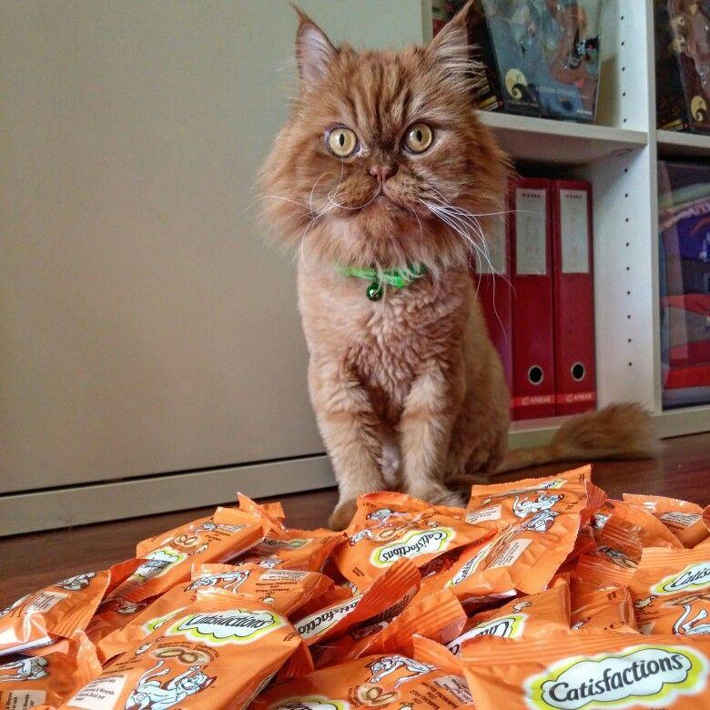 Estamos novamente a participar na campanha #catisfactions da #youzz e recebemos imensos biscoitos. Hmmmm, mnham mnham #youzzcatisfactions