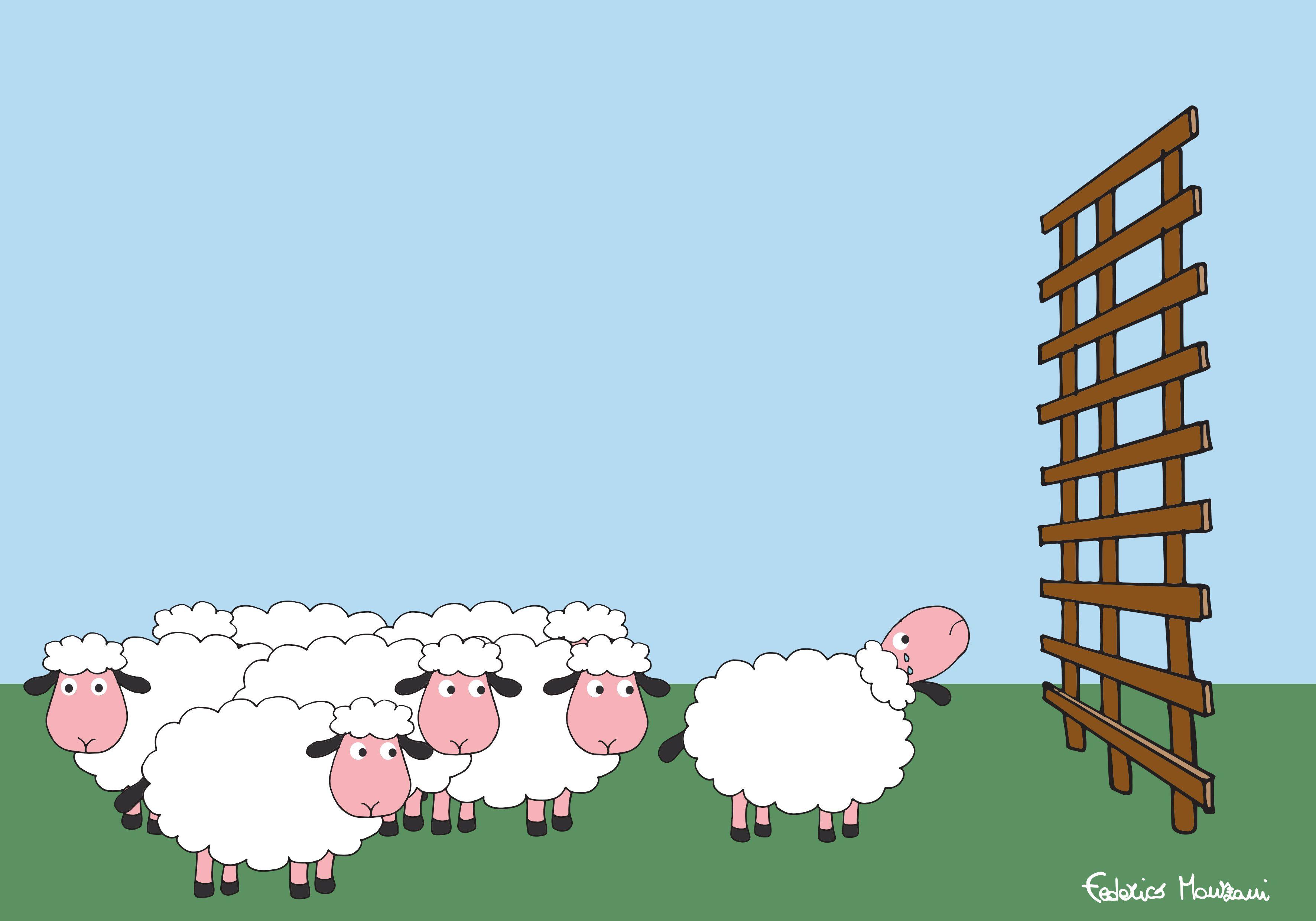 Sheep by Federico Monzani