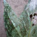 8 métodos para el manejo ecológico de plagas