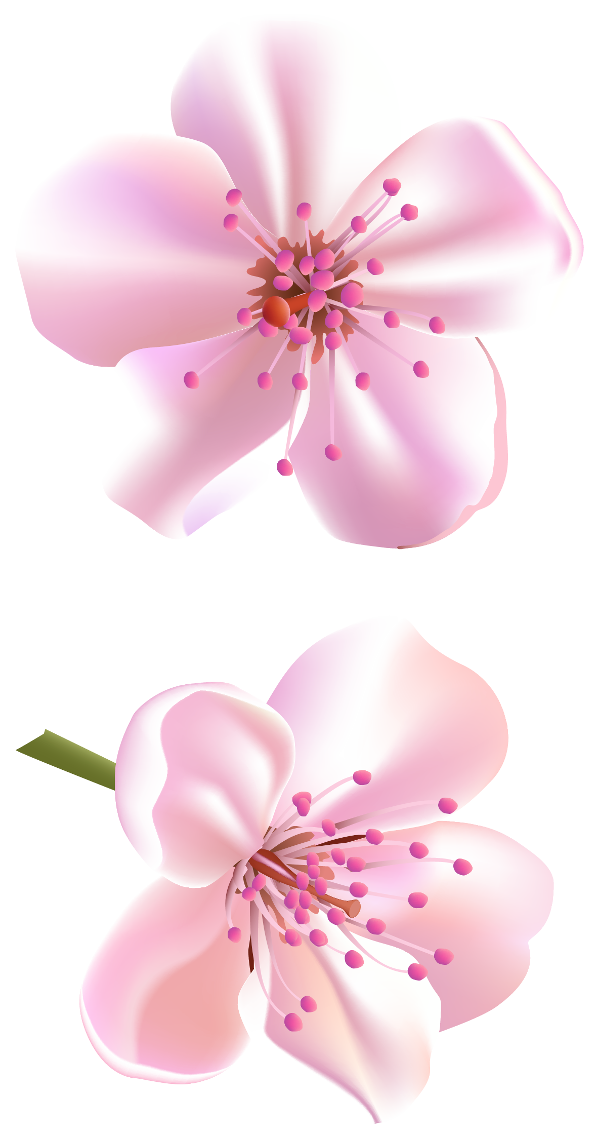 Spring Pink Tree Flowers PNG Clipart Deco peinture