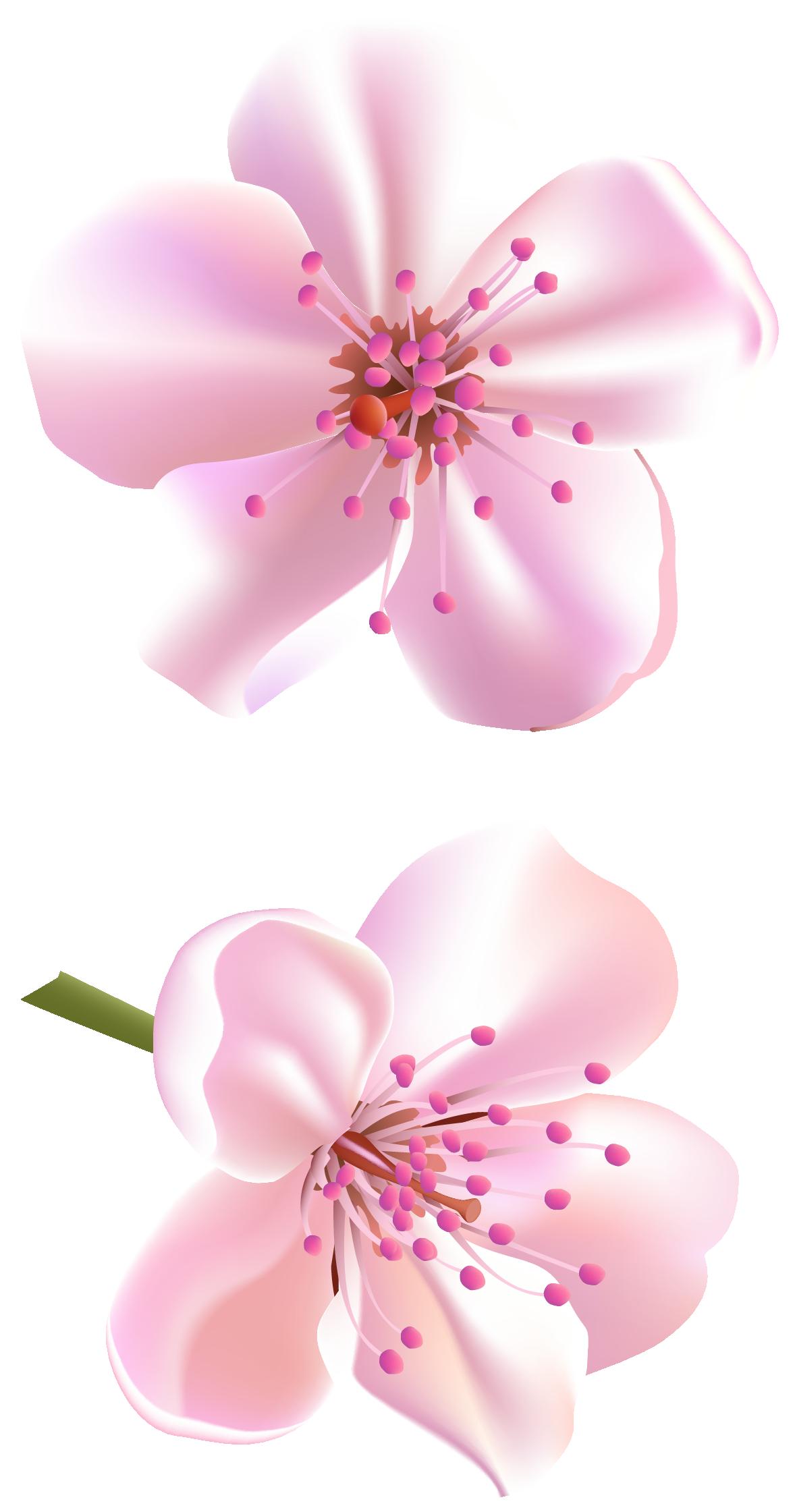 Spring Pink Tree Flowers Png Clipart Flower Prints Framed Flower Clipart Clip Art