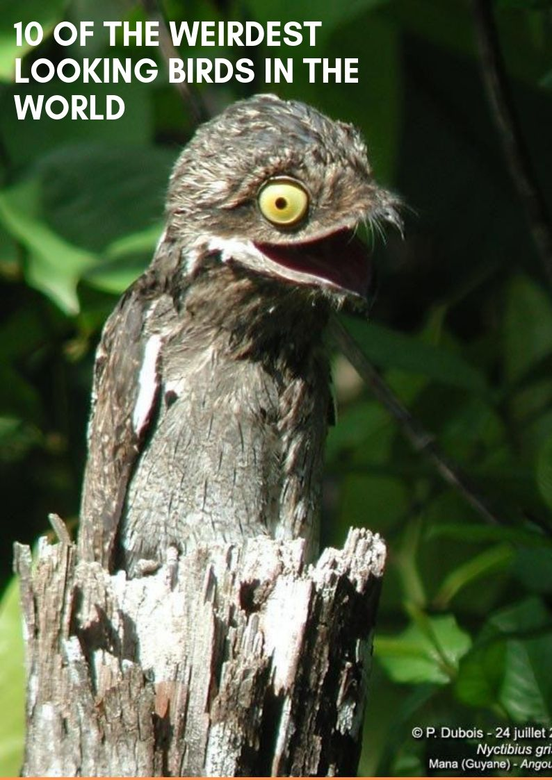 10 Of The Weirdest Looking Birds In The World | Amazing Collection