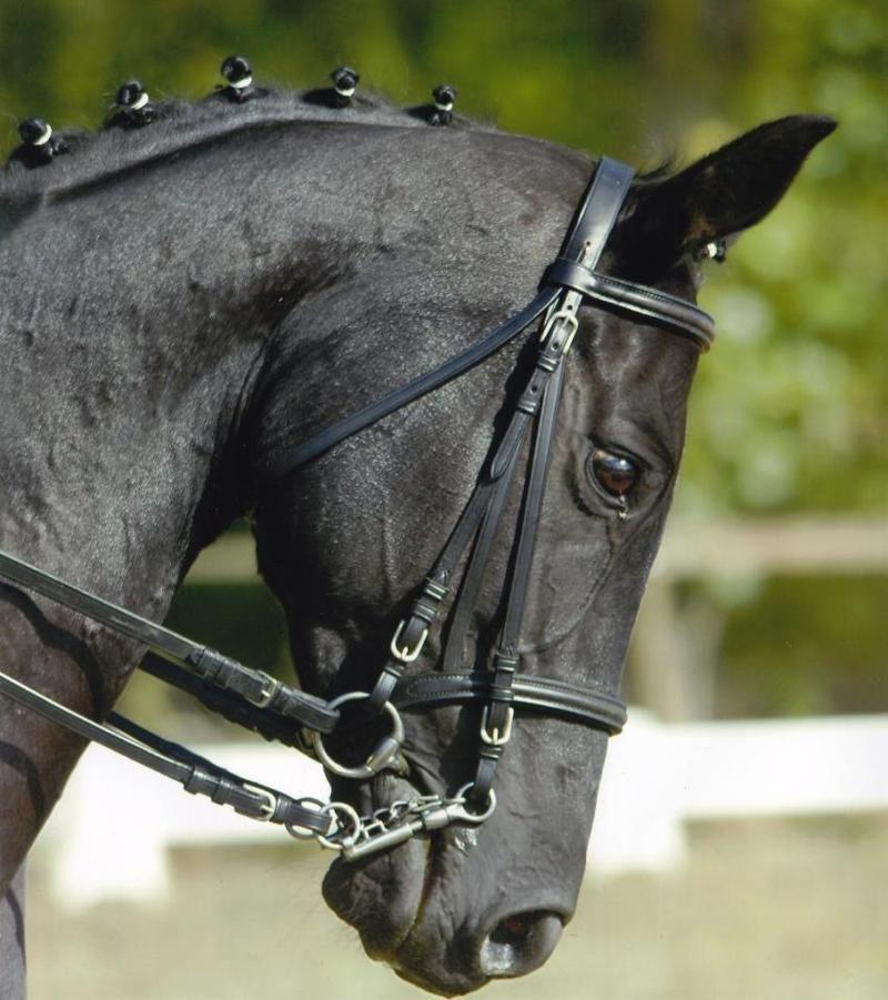 le pur sang la t te d un pur sang anglais le pur sang thoroughbred pinterest horse. Black Bedroom Furniture Sets. Home Design Ideas