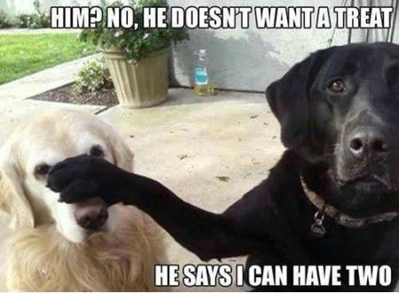 I Can Have Two Funny Quotes Memes Dogs Pets Meme Funny Dog
