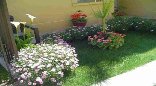 plantas de sol para jardin - Buscar con Google