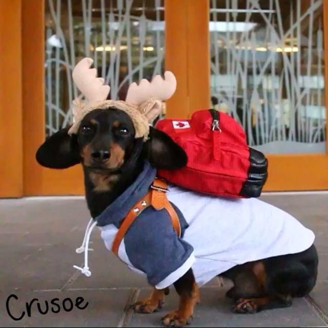Crusoe the Dachshund's Bahamas Sailing Vacation | Doovi