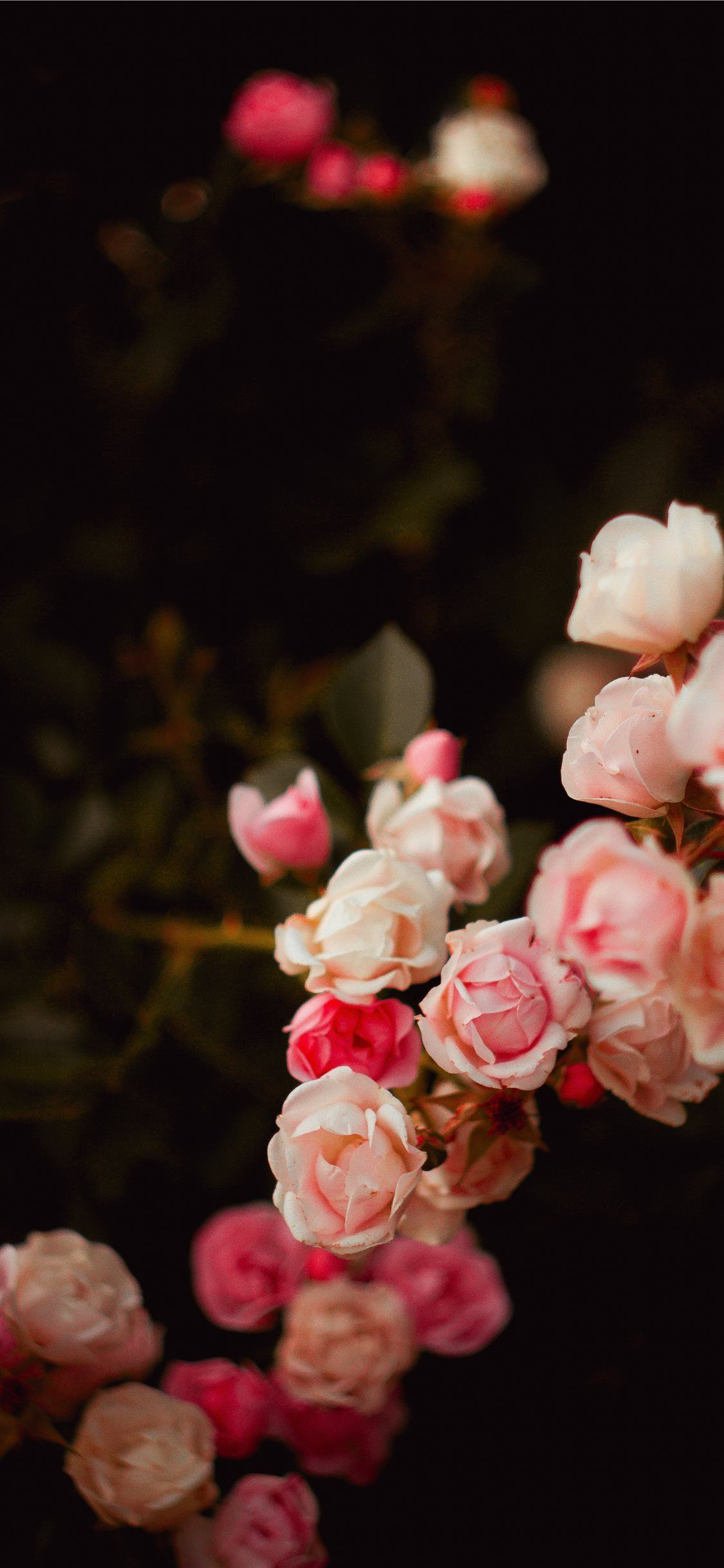 21 Pretty Wallpapers For Your New Iphone Xs Max Preppy Wallpapers Floral Wallpaper Iphone Preppy Wallpaper Floral Wallpaper