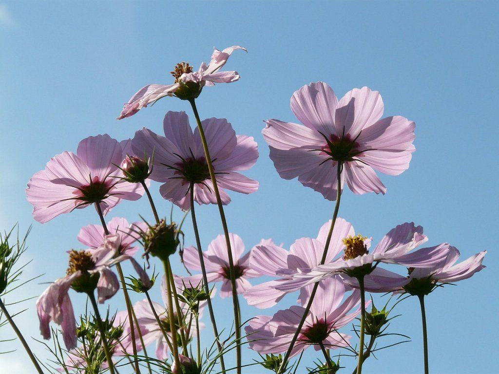 10 plantas perennes para un jardin con flores de primavera - Jardines con rosas ...