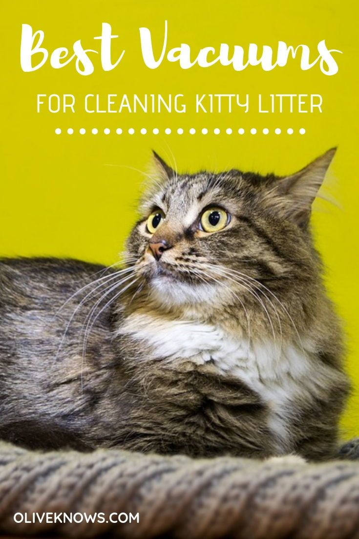 Best Vacuums for Cleaning Kitty Litter Cat Grooming Tips
