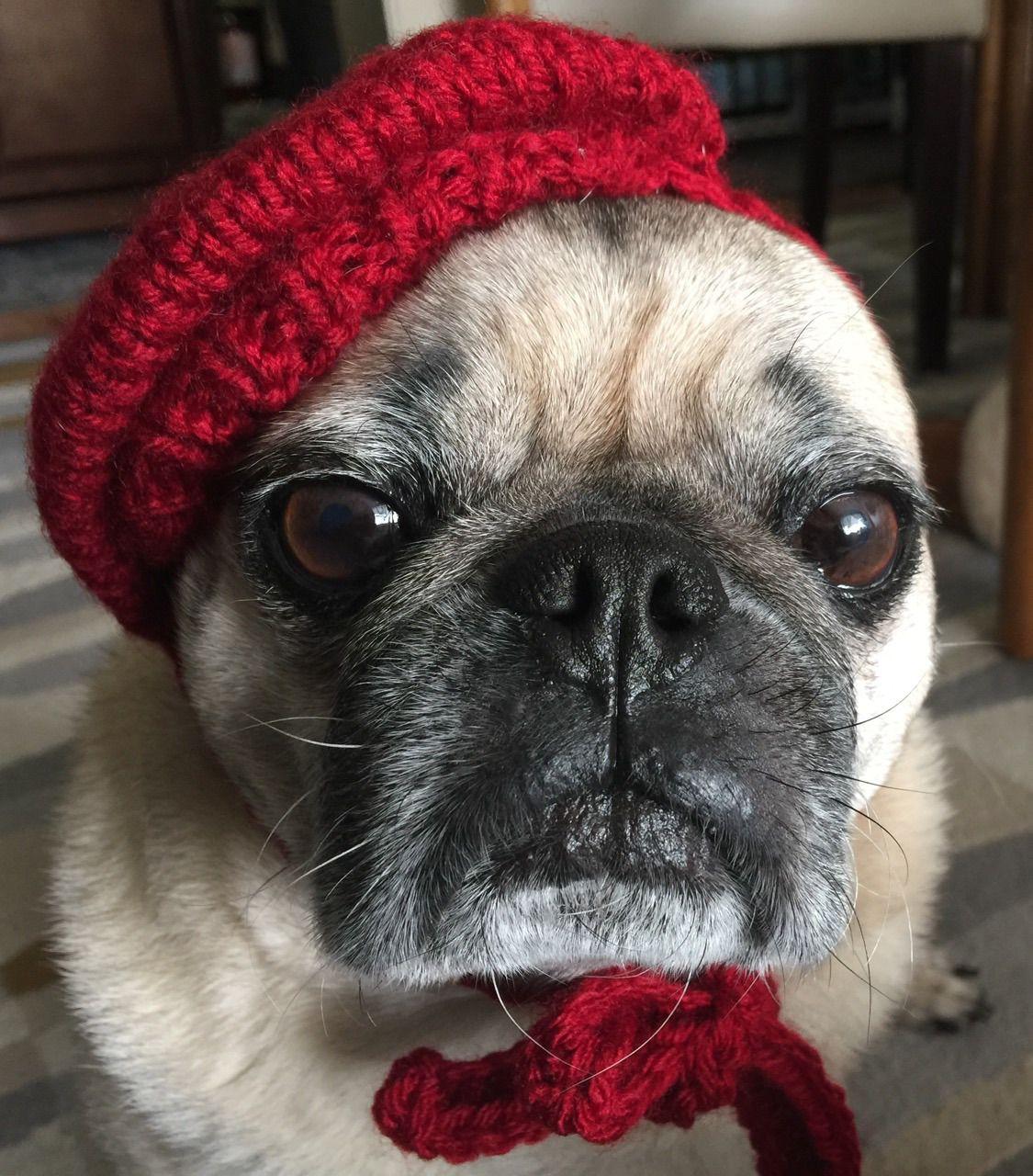 Perisian Pug Pugs, Winter hats, French bulldog